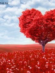 В День влюбленных: О любви, одиночестве и о подарках